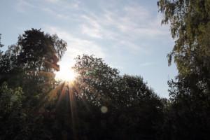 Sommarmorgon